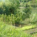 Vrt iz drugega zornega kota