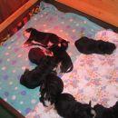 Takole spijo po hranjenju
