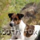My love- S. fox terrier