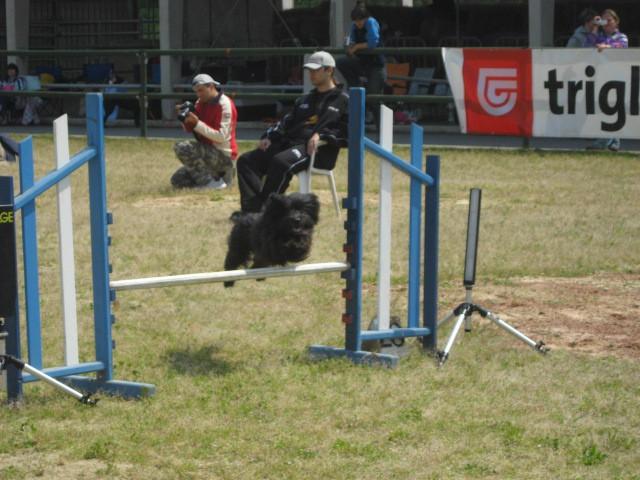 Agility tekma Gornja Radgona-26.4.2008 - foto