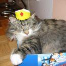 Tukaj pa sem pravi kralj!