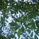 Listje