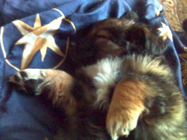 Mecia :) Jaka ona slodka jak spi
