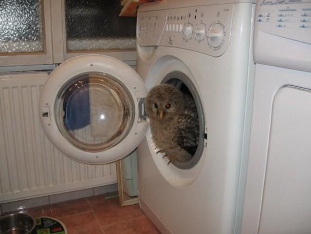 Sem se šla skrit v pralni stroj