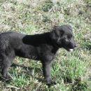 BILI, star 4 mesece, 2004  Rojen v Slovenj Gradcu,9.11.2003 in podarjen kot najlepše bož