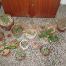 moja zbirka kaktusov-rože, ki sem jih vzljubila