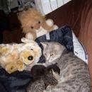 Bratca sta na kosilu! Straži ta pojoči pes in levček!