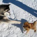 O kako majhen kuža. Si za igro?