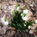 Pomlad?