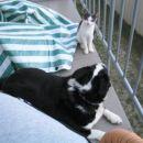 Tarzan in Pia na balkonu