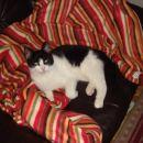 Bucko na usnjenem fotelju :-)))
