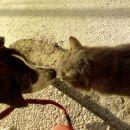 Sosedov Maksi je tako prijazen kuza... ehm.. muc v bistvu :)