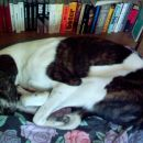 Najbolj udobno je spat tako, da imam sprednje noge zadaj, zadnje noge pod glavo spredaj, p