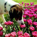 Te roze tako zelo disijo... mmmm...