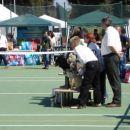 The best puppy cac Rovinj 15.04.07. Alisa - Sindi Engleski bulldog 3 mjesto