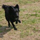 Rudi (Kal Con Maige) 1.4.2007