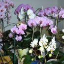 Vse cvetoče