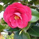 ostale rože