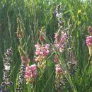 tudi travniške rože so lepe