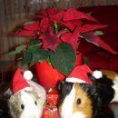Dva Božička nosita darila in pozirata za voščilnico