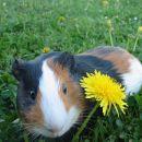 Rad poziram na pomladni travi