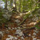 kamnje, veje , listje, adrenalin šprica na vse strani !