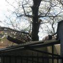 na strehi čakam na zajtrk
