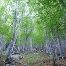 na eni strani gozd...
