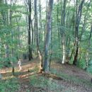 po gozdu