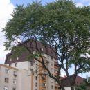 *Ravne - Javornik -največja stanovanjska četrt na Koroškem
