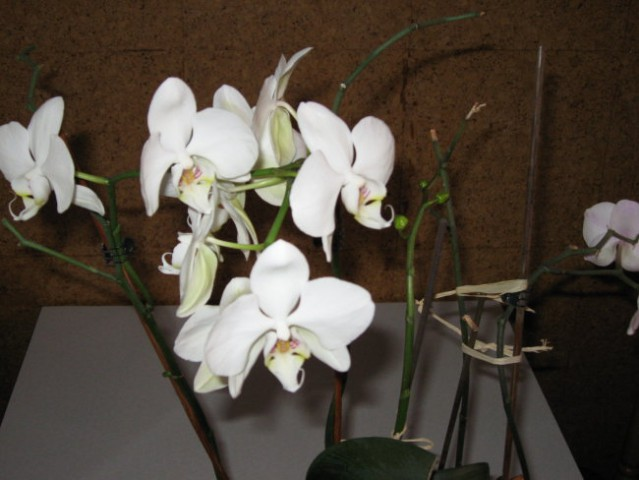 še 1x orhideji 13.12.07