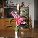 lilija možu za rojstni dan
