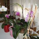 orhideje 09.02.08