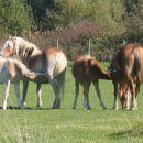 luxemburška konjska idila
