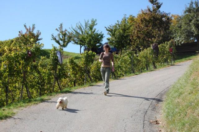 Lola in trgatev 2008 - foto