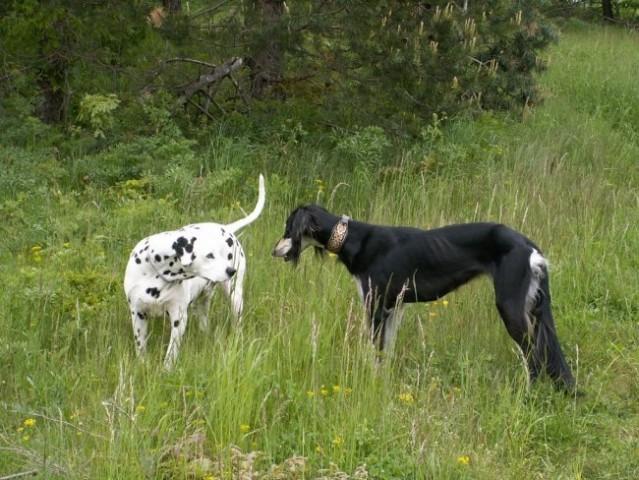 Kira in Timi