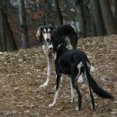 Kira in bratec Dalil