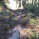 Sredi gozda, betonirana cesta.