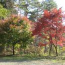 Slavni japonski 紅葉.