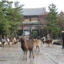 Vhod v Todai tempelj.