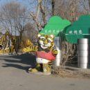 Nov dan - vhod v Park s sibirskimi tigri.
