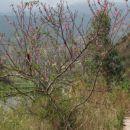 Drevje ze cveti.