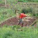 Na polju je vedno delo.